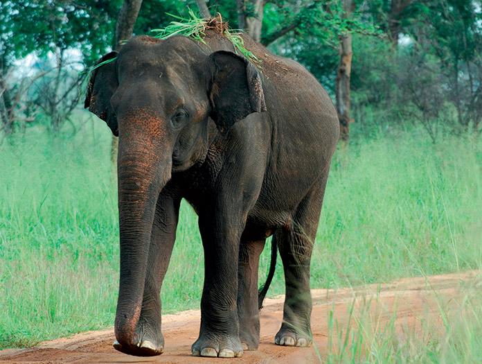 Circuit Perles du Sri Lanka