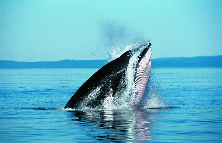 Circuit Découverte de l'Est Canadien - Extension Amérindiens et nuit en famille, baleines - Sans Transport