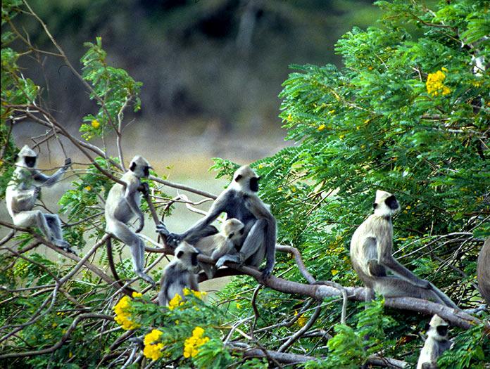 Circuit Majestueuse Ile De Ceylan Et Jaffna Sri Lanka
